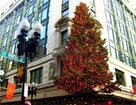 毎年11月の第4木曜日にある感謝祭が終わると、ホリデーシーズンを迎えて飾り付けを始めます。ボストン中心部にある老舗デパートの入り口の上に置かれたクリスマスツリーもその1つです。