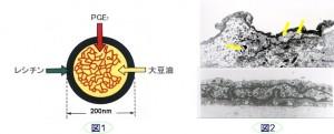プロスタグランジンE1(PGE1)封入ナノ粒子製剤