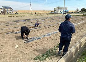 社員4人が農作業に従事している